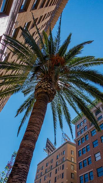 Culver City Property Management image 1