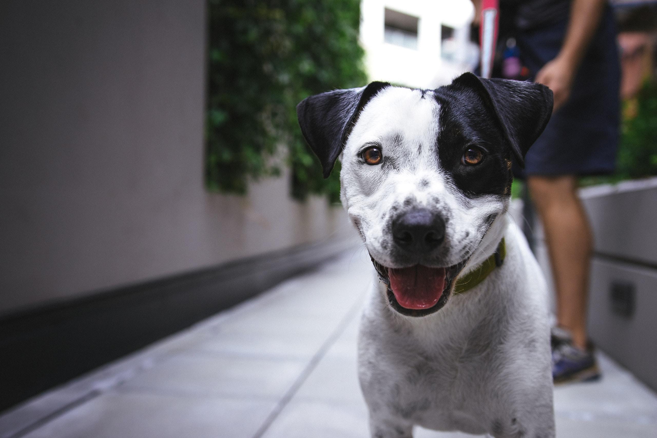 3 Tips for Pet-Friendly Rentals thumbnail