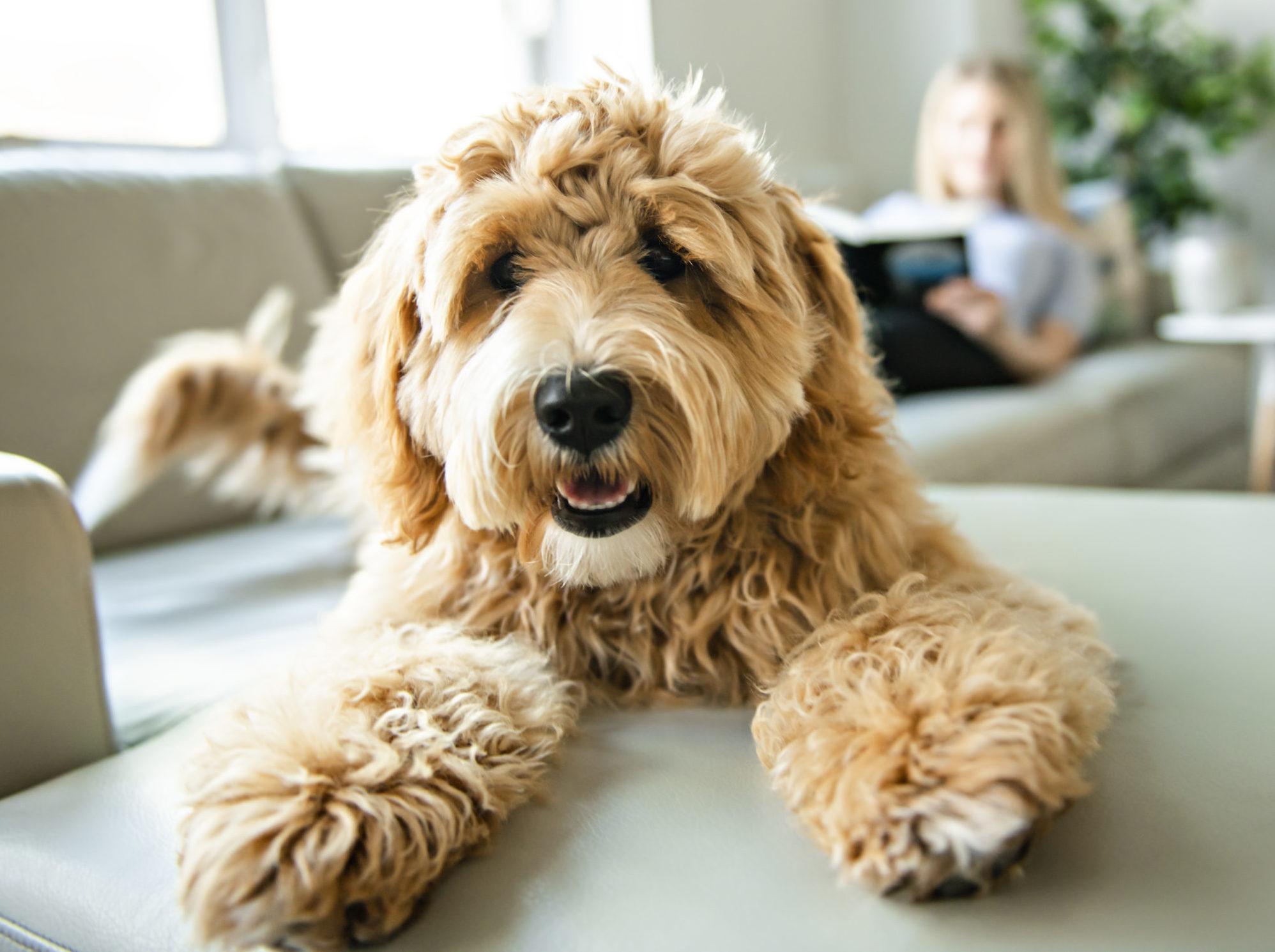 Pet-friendly rentals can attract tenants to a rental property.